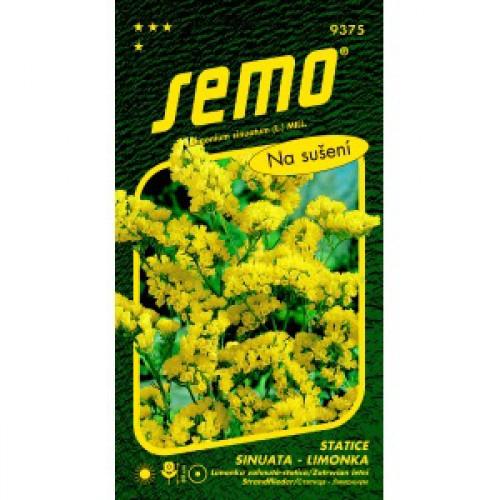 Statice sinuata limonka YELLOW